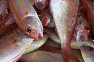 Distribuidora de Peixes | Fornecedores atacadista de congelados e frescos