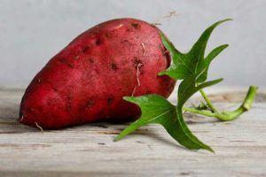 Batata doce benefícios e malefícios | Engorda ou emagrece?