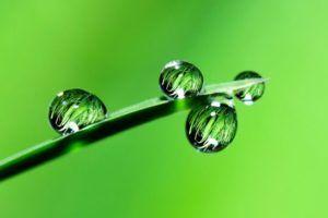 A planta janaúba ajuda no tratamento da diabetes?