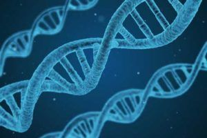l-theanine | Contra indicações, benefícios e para que serve?