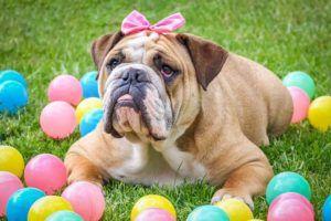 Produtos de Pet Shop no atacado e para revenda direto da fabrica